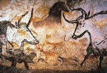 Taureaux dans la grotte de Lascaux