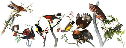 Logo de Jean-Jacques Audubon