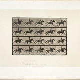 Le cavalier à Cheval - Eadweard J. Muybridge