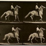 La locomotion d'un cheval - Eadweard J. Muybridge