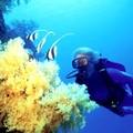 100ème anniversaire de naissance de Jacques Cousteau