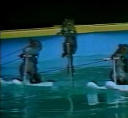 Vidéo de trois écureuils qui font du ski nautique (publicitédeRogers)